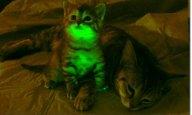 glow-cat-007