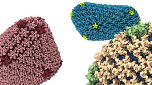 HIV capsid